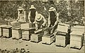 Gleanings in bee culture (1916) (14590856077).jpg