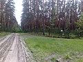 Gmina Pysznica, Poland - panoramio (8).jpg