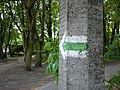 Golecin Poznan green trail 2.jpg