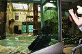 Gorilla Berlin Zoo.JPG