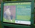 Goshawk spotting point - geograph.org.uk - 809614.jpg