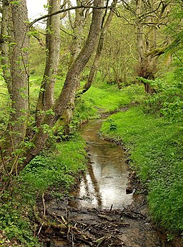 Grain Beck in Dalby Forest - geograph.org.uk - 1318006