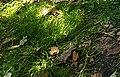 Grass, ground, soil, speckled sun.jpg