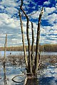 Grass Lake (Revisited) (7) (17155202277).jpg