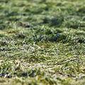 Grassy Knoll (2681000770).jpg