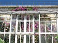 Greenhouse (2692969182).jpg