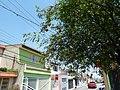 Guarulhos, Romãs, R. Mauricio de Oliveira - panoramio.jpg