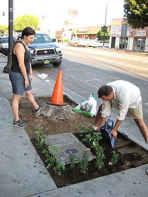 Guerrilla gardening - Guerrilla gardening on a Los Angeles street.
