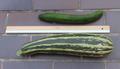 Gurke Zucchini Vergleich.png