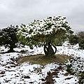 Högebjär Träd.jpg