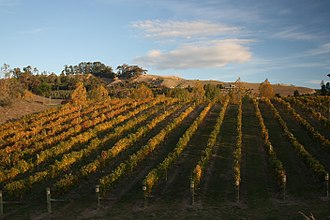 Hawke's Bay Region - A Hawke's Bay vineyard in autumn