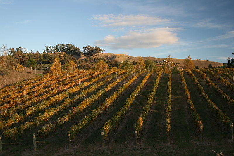 File:HB Vineyard autumn.JPG