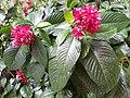 HK ML 半山區 Mid-levels 堅尼地道 Kennedy Road 香港公園 Hong Kong Park flora green leaves February 2020 SS2 04.jpg