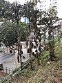 HK SW 上環 Sheung Wan 鴨巴甸街 Aberdeen Street morning Febtuary 2020 SS2 11.jpg