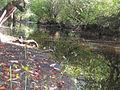 Habitat of Semiardistomis cyaneolimbatus (Chevrolat) at Rio Itabo, Isla de Pinos, Cuba - ZooKeys-210-019-g016.jpeg