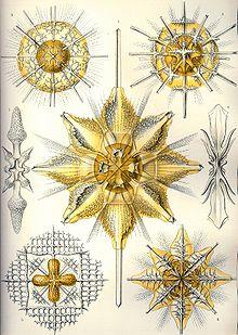 Haeckel Acanthometra.jpg