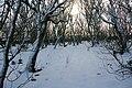 Halligarth, Baltasound, in the snow - geograph.org.uk - 1691755.jpg