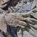 Hand van beeld met schimmel - Woerden - 20216078 - RCE.jpg