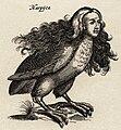 """Harpij - I.I Schipper 1660, graveur Matthius Merian, naar J.Jonstons' """"Naekeurige Beschryvingh van de Natuur"""".jpg"""