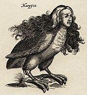 """Harpij - I.I Schipper 1660, graveur Matthius Merian, naar J.Jonstons' """"Naekeurige Beschryvingh van de Natuur"""""""