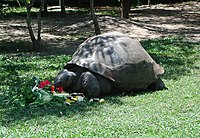 Harriet the Tortoise in 2002