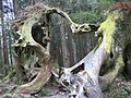 Heart Shaped Tree 01.jpg