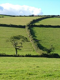 Hedges near Lower Bowcombe - geograph.org.uk - 233386.jpg