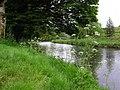 Hemlock, Cranny - geograph.org.uk - 1307307.jpg