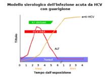 Modello sierologico dell'infezione da HCV in caso di guarigione. Si nota la normalizzazione degli enzimi epatici (ALT), dopo la scomparsa del virus, e la persistenza degli anticorpi anti-HCV (fonte: CDC).