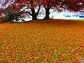 Herbststimmung an einem nebligen Tag am Zürichhorn 2011-11-07 12-13-12 (SX230HS).JPG