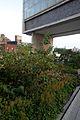 High Line, New York 2012 49.jpg