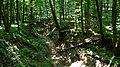 Hiking prin Codru.jpg