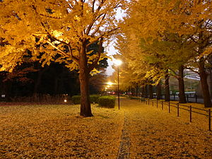 Hodogaya Park in Yokohama Japan.JPG