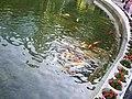Hong Kong Park 香港公園 (5292019983).jpg