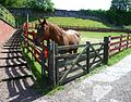 Horse at Gorgie City Farm.jpg