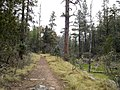 Horton Creek Trail, Payson, Arizona - panoramio (3).jpg