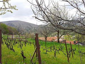 Ilići - Image: Ilici Orchard