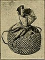 """Image from page 152 of """"Bulletin"""" (1901).jpg"""