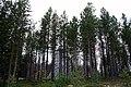 Inari, Finland - panoramio (2).jpg