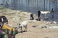 India-1970 097 hg.jpg