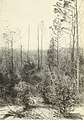 Injury to vegetation and animal life by smelter wastes (1908) (14779096974).jpg