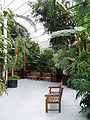 Internal, Palm House, Sefton Park (2).jpg