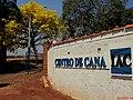 Ipê amarelo (Tabebuia serratifolia) na entrada do Instituto Agronômico de Campinas (IAC) – Centro de Cana, na Rod. Pref. Antonio Duarte Nogueira, km 321 (Anel Viário Contorno Sul), em Ribeirão Pret - panoramio (1).jpg