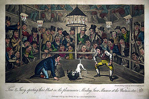 Jacco Macacco - Tom and Jerry sporting their Blunt on the phenomenon monkey Jacco Macacco at the Westminster-Pit (1821) by George and Isaac Robert Cruikshank