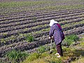 Japanese woman looking over a field.jpg