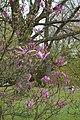 Japanse Tuin Hasselt - 07.jpg
