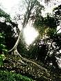 Jardín Botánico de Caracas - Distrito Capital 1.jpg