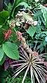 Jardim Village do Dendê, Gamboa do Morro,Cairu - Anna Maria Innocenzi -N° 28 flor selvagem mata atlantica.jpg