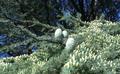 Jardin Botanique Cantonal Lausanne - IMAG3631-crop.png