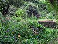 Jardin des iris au jardin des plantes.jpg